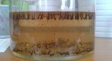 Biologie du Moustique