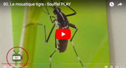 Reportage Souffel PLAY